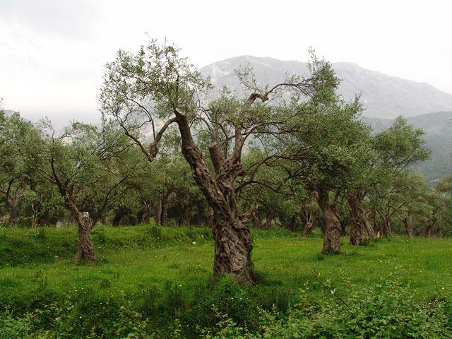 Фермерский рынок Арля: продукты, которыми славится регион